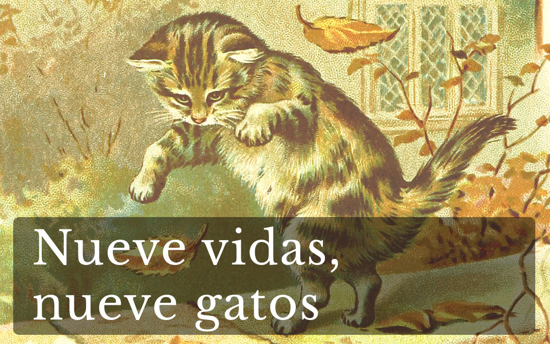 Nueve vidas, nueve gatos